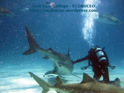 Acariciando al tiburóntigre