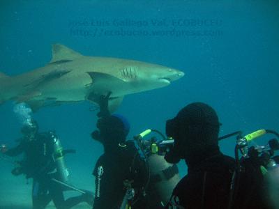 Contacto directo con tiburónlimón