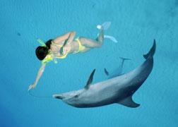 Contacto con delfines salvajes en fondos de tan sólo 5 metros