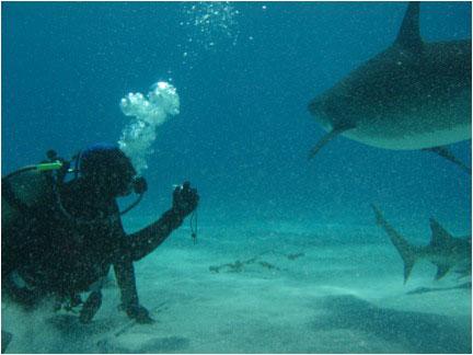 Contacto directo con Tiburón Tigre